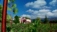 WS Grape vines and fences in Monticello Vineyards in Napa Valley / Napa County, California, USA