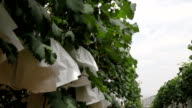 grape with paper wrapped in garden under sky