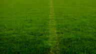 Gras (HD 720)