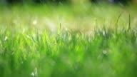 Erba e la pioggia-messa a fuoco differenziale