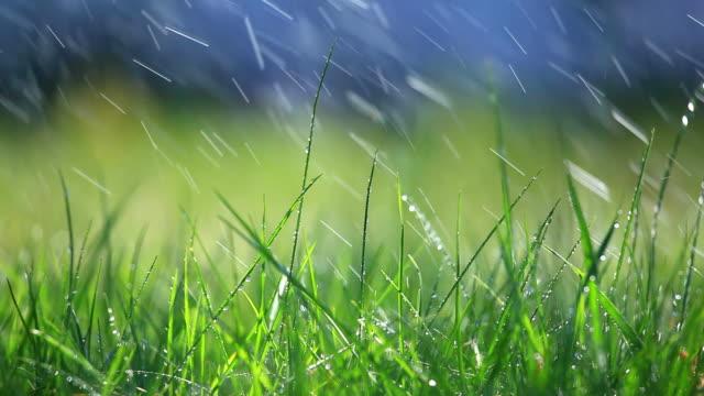 Grass and rain - selective focus