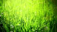 Grass area.