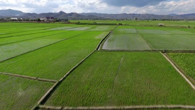 Grass field (aerial video)