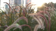 grass flower in bangkok city tower background