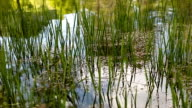 Gras wächst in einigen ruhigen Wasser