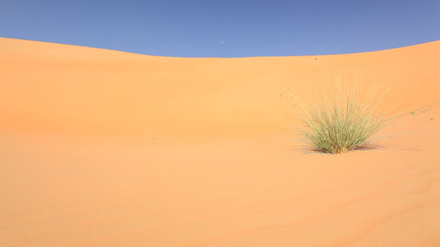 grass in desert stock footage video getty images. Black Bedroom Furniture Sets. Home Design Ideas