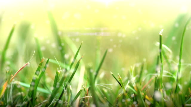 Grass in Sunlight. HD