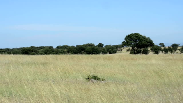 Grass in the Wind in the Serengeti