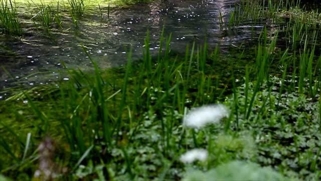 Gras is schudden van de waterstroom