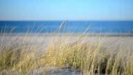 Grass on Beach Dunes along Baltic Sea at sunset.