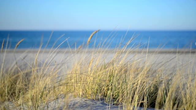 Erba sulla spiaggia di dune in Mar Baltico al tramonto.