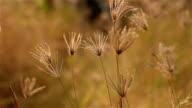 Gras auf dem wind