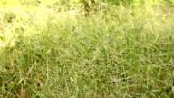 Grass swaying on meadow
