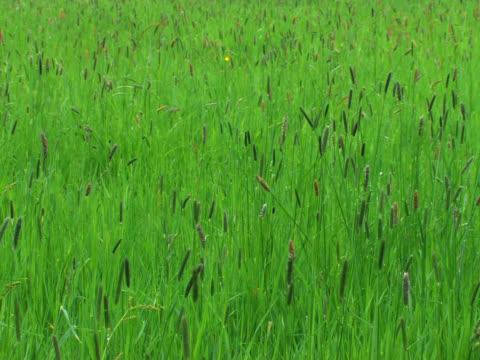 PAL: Grass