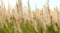 Grasses in the summer
