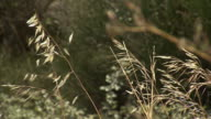 Grasses sway in a gentle breeze.