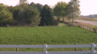 Grassy hill trees w/ green leaves to narrow road white fence FG brown fields BG