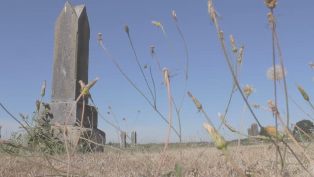 Grave stone with fading sunflowers shaken by wind in foreground