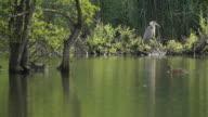 gray heron + duck