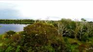Great Egrets, Wetlands, Pacaya Samaria, Peruvian Amazon, Peru