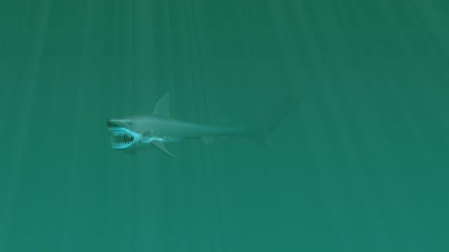 Great White Shark Serie HD