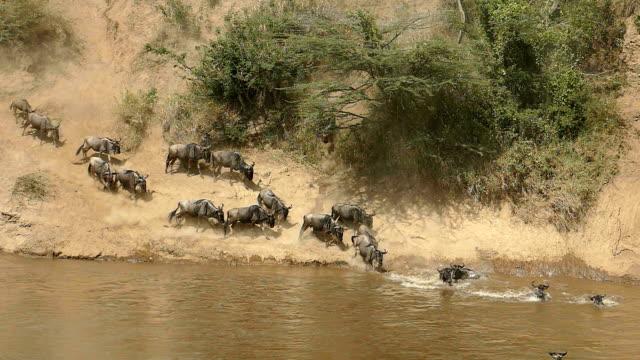 Great Gnu Migration in Kenia