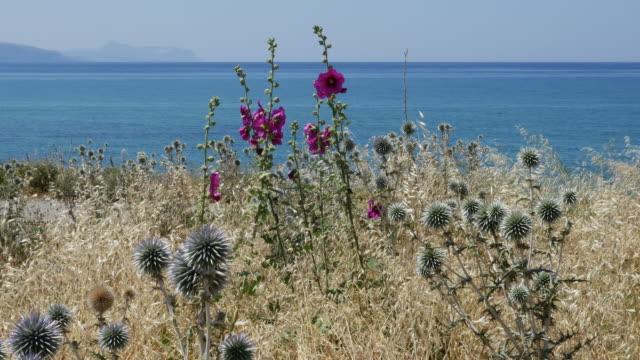 Greece Crete coastal view featuring hollyhocks