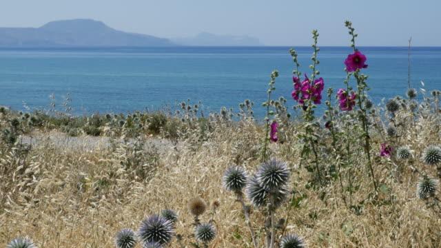 Greece Crete coastal view with hollyhocks