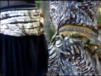 Greek Gypsy Belly Dancers Shaking their Hips