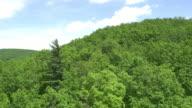 AERIAL Green und dichten und Flug über den Regenwald