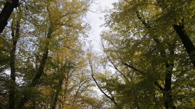 Green and yellow footpath in autumn, Mount Macedon, Victoria, Australia