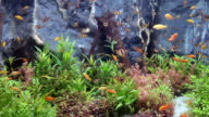 Green beautiful planted tropical freshwater aquarium with fishes