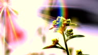green bud flower