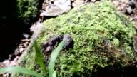 Green fern moss in nature.