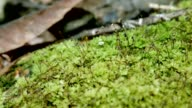 Green fern moss in nature.