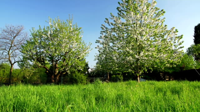 CRANE UP: Green Field and Cherry Trees