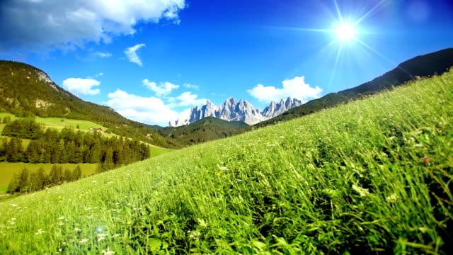 Campo verde sotto un cielo blu