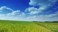 GRU UP: Verde campo