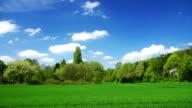 CRANE DOWN: Green Field