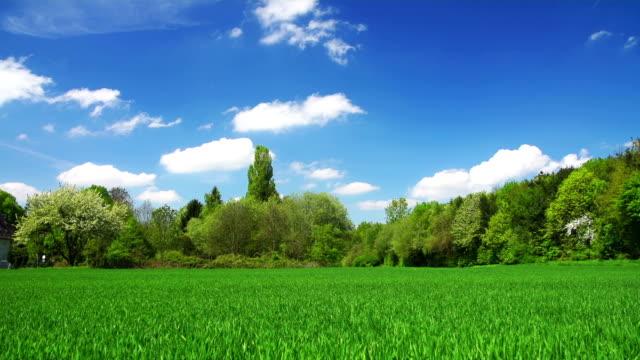 CRANE UP: Green Field