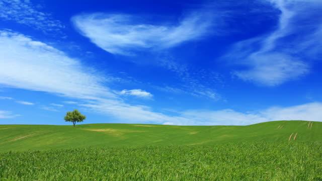 Campo verde e l'azzurro del cielo