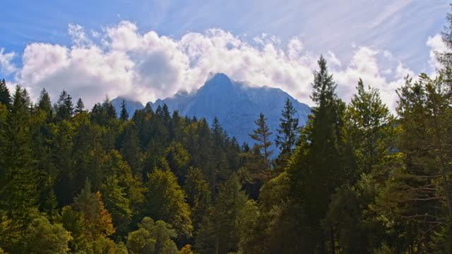 Grünen Wald vor blauem Himmel