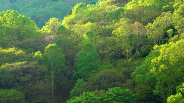 Green forest foliage