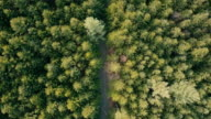 Green forest from above - Aerial drone view