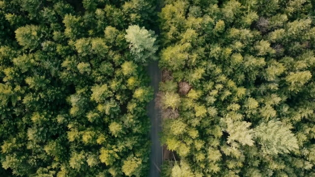 Groene Woud above - luchtfoto drone weergave