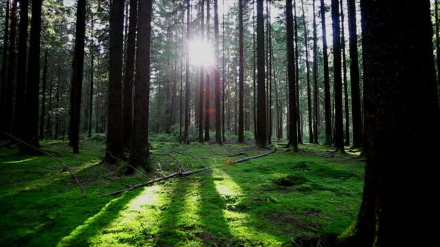 Green Forest In The Sunlight Tracking Shot