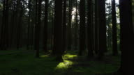 tracking shot HD-Green forest
