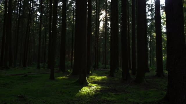 HD Green forest tracking shot