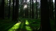 Grünen Wald Kamerafahrt