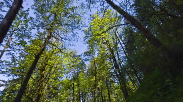 Green Forest with Douglas Fir Tree